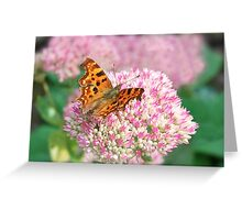 A Butterfly On Sedem Greeting Card