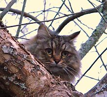 Oatmeal...Woods cat by Lonnie Ornie