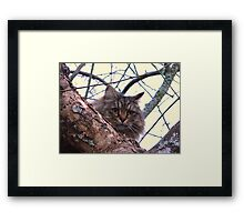 Oatmeal...Woods cat Framed Print