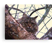 Oatmeal...Woods cat Canvas Print