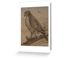 Birds of Indiana - Red Tail Hawk Greeting Card
