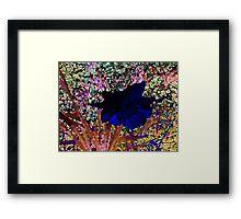 Blue Daffodil Framed Print