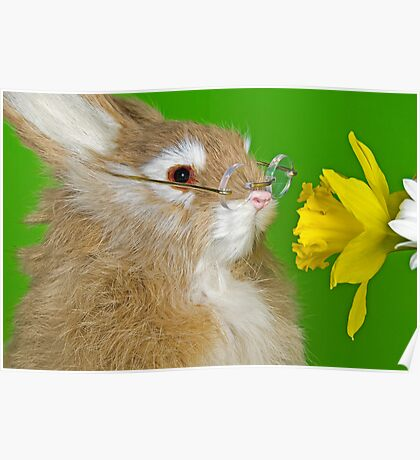 Daffy Bunny Poster