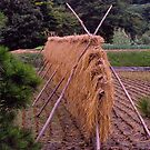 Drying the harvest, Japan Alps, Japan. by johnrf