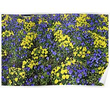 Pansy Paradise Poster