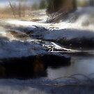snowy Oregon forest, Fox Creek 4 by Dawna Morton