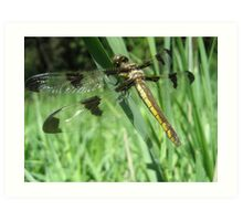 The Wings of a Dragonfly Art Print