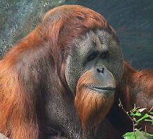 Orangutan by carpenter777