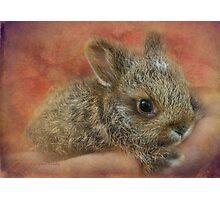 Snowshoe Hare Photographic Print