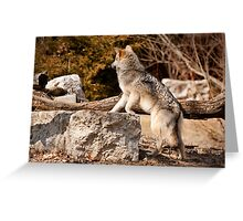 Check It Out Greeting Card