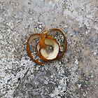 Orange Peel - Mandeville, Jamaica by Allie Ludvigson