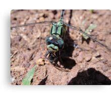 Dragonfly Closeup Canvas Print