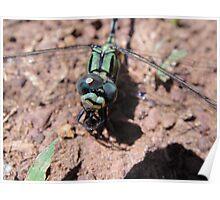 Dragonfly Closeup Poster
