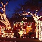 Austin Christmas Lights by dmsoutdoor