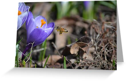 Bees on the first flowers by Kate Farkas