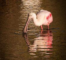 Roseate Spoonbill - Merritt Island Wildlife Refuge by John Hartung
