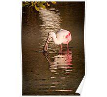 Roseate Spoonbill - Merritt Island Wildlife Refuge Poster