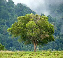 Tree Beauty  by Margaret Stockdale