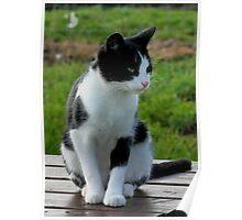 Black & White Kitten Poster