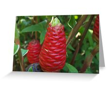 Red beehive ginger - Zingiber spectabile  Greeting Card