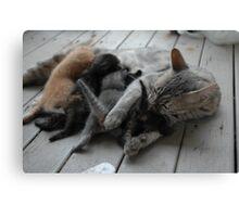 Cute kittens feeding time Canvas Print