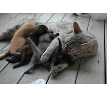Cute kittens feeding time Photographic Print