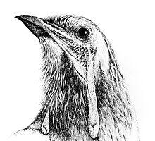 Yellow wattlebird by brettus