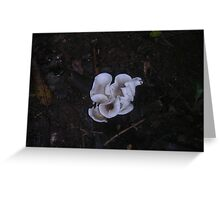 Fungi 10 Greeting Card