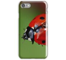 7 Spot Ladybird Getting Ready for TakeOff iPhone Case/Skin