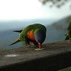 Australian parrots 2 by Ian McKenzie