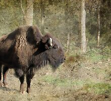 Tyson the Bison by Eve Parry