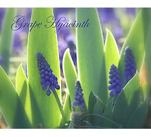 Spring Lovelies! Photographic Print