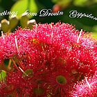 Pink Ficifolias - Princes Way, Drouin by Bev Pascoe