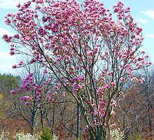 The Tulip Tree by barnsis
