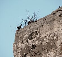 Pigeon Of Acropolis. by amimages