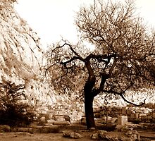 Tree Of Acropolis by amimages