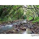 Waimea Valley, Oahu Hawaii by Ryan Epstein