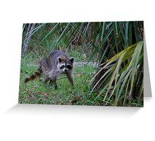 Raccoon in palmettos Greeting Card