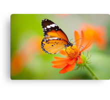 Butterfly 1 Canvas Print