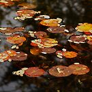 Floating Leaves by AnnDixon