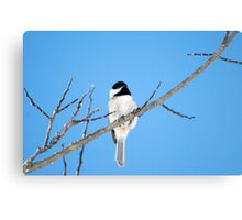 Black-capped Chickadee March 24th, 2011 Canvas Print