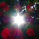 Sunsparkle Through the Camelias by Kate Eller