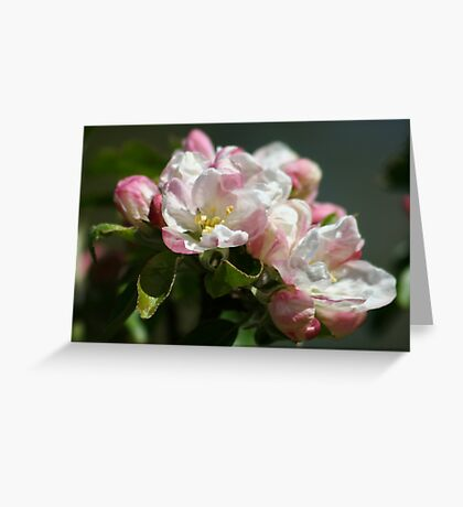 Apple Blossom Time Again Greeting Card