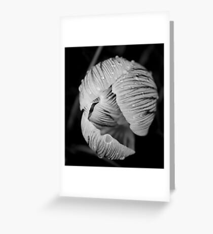 Flower drops Greeting Card