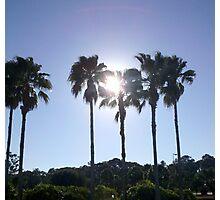 Sunny Palms Photographic Print