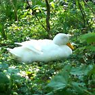 White Duck by gemsie89