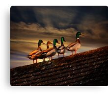 Rooftop Ducks Canvas Print