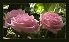 pink rose in shades by LisaBeth