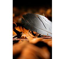 Night feathers Photographic Print
