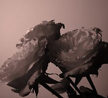 tinted rose3 by LisaBeth